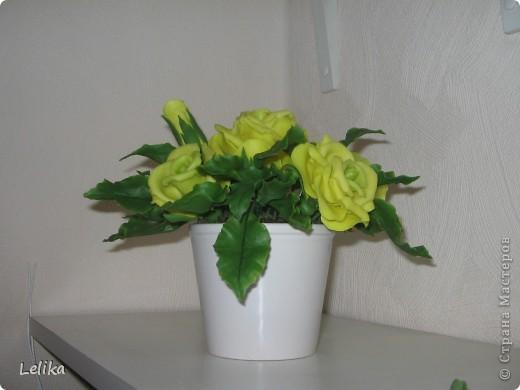 Вот такие желтые розы в горшочке у меня получились.  фото 1