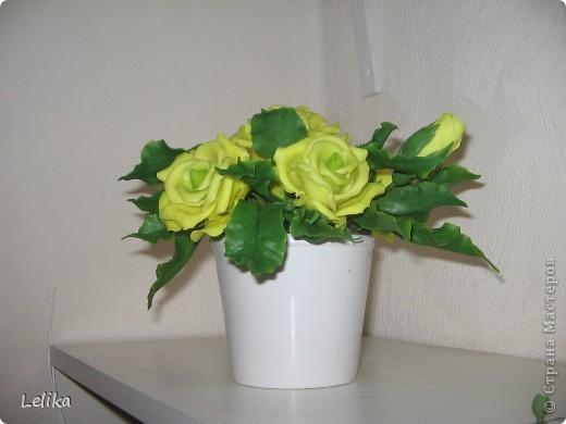 Вот такие желтые розы в горшочке у меня получились.  фото 2