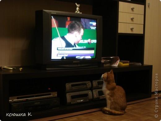 День кошки. фото 1