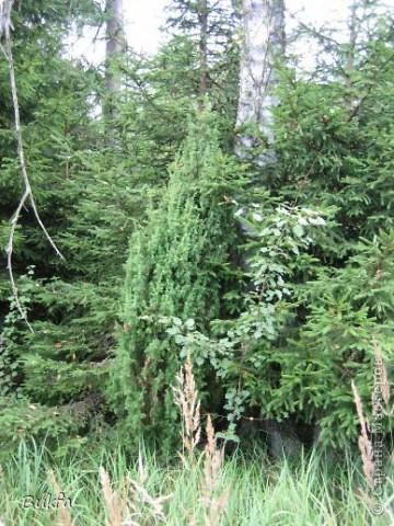 Начнем с частного. Это что: трава, мох? фото 5