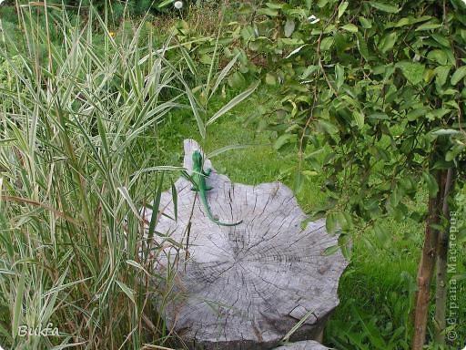 Начнем с частного. Это что: трава, мох? фото 9