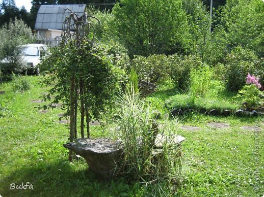 Начнем с частного. Это что: трава, мох? фото 8
