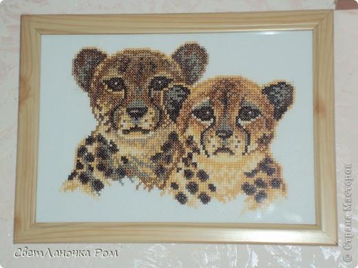 Леопарды фото 1