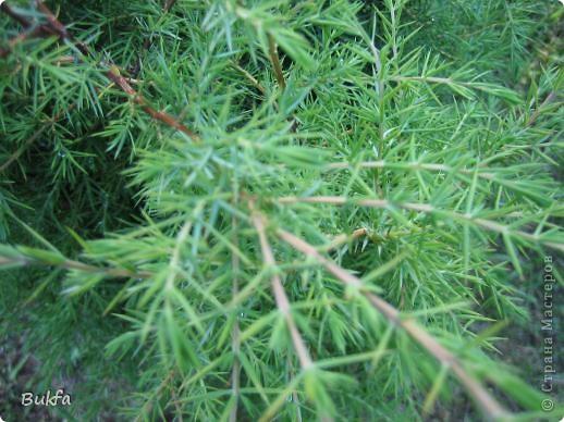 Начнем с частного. Это что: трава, мох? фото 1