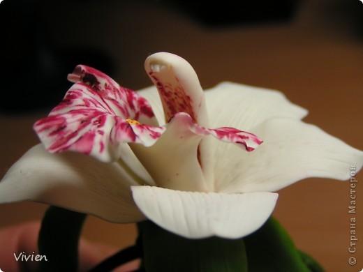 Ну вот и я вылепила орхидею. Сегодня курсы помогли, глина была супер, материалы все, какие нужно, Вообщем, красота! Я имею ввиду не свой цветок, а процесс-) Цветок можно использовать в качестве прихвата для штор, да и просто носить как браслетик, например, на свадьбу самое оно-) фото 4