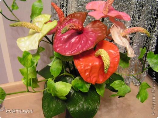 Давно хотела сделать антуриумы, но ни как не могла придумать как прикрепить между собой ствол, цветок и пестик. И вот вопрос решён (всего две неудачи выбросила)!А о результате судить Вам дорогие мастера. фото 5