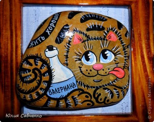Морские котики фото 6