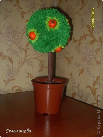 Моё первое дерево