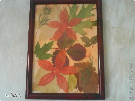 моя первая картина из сухих листьев  фото 1