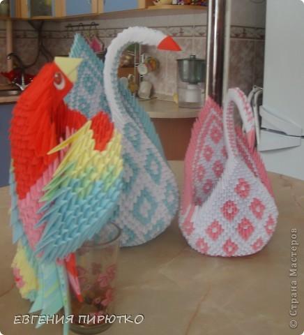 пара лебедей фото 3
