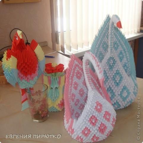 пара лебедей фото 2