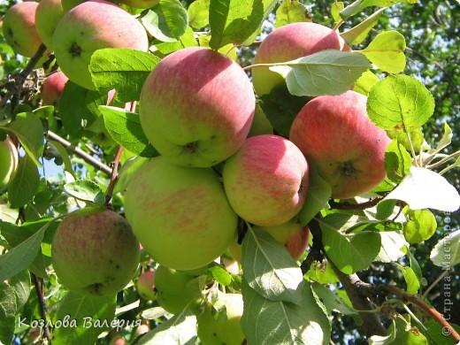 дикии виноград поздней осенью фото 6