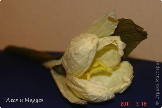 крокус из гофрированной бумаги фото 4