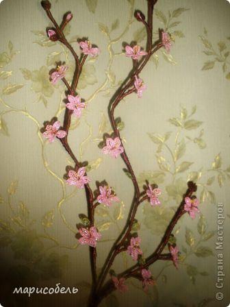ветка персика фото 1