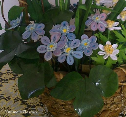 Наконец то повеяло настоящей весной!!! Начинают расцветать первые весенние цветочки. Хрупкие, нежные... И у меня весеннее настроение. Хочу подарить его и Вам!!! фото 4