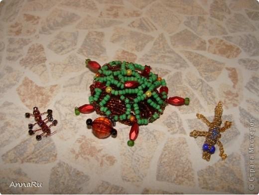 Животные и насекомые фото 2