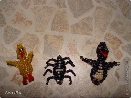 Животные и насекомые фото 3