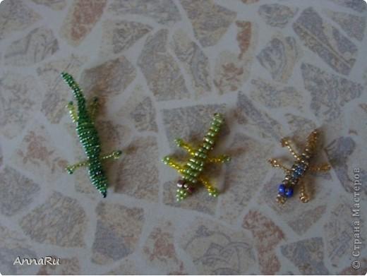 Животные и насекомые фото 4