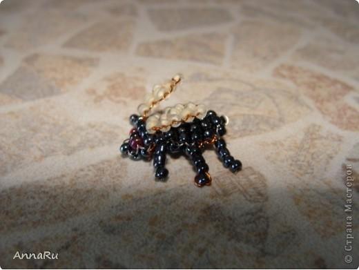 Животные и насекомые фото 8
