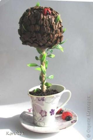 Кофейное деревце фото 1