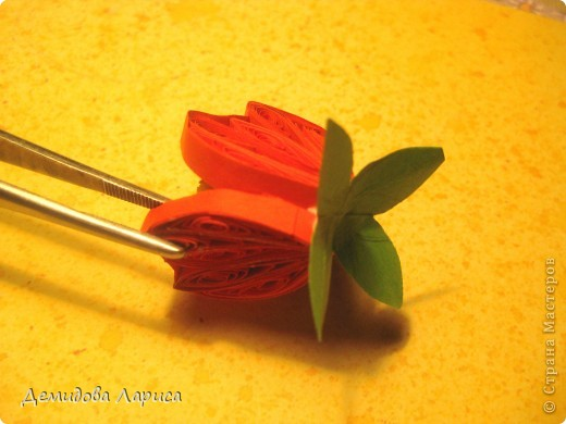"""Лирическое отступление. ВЕРА НАЙДИЧ """"МАЛЬВА"""" Красавица мальва под окном расцвела, И на праздник лета она нас позвала, Розовые, нежные,славные цветы, Мальву нарядили на конкурс красоты. Гордая красавица надменно глядит, Под ветром не сгибается, лишь шелестит. Есть в цветке загадка, какая не пойму, Очень осторожно к мальве подойду. И шепнет она мне на ушко свой секрет, Но только не раскрою вам его я нет! Розовую мальву с любовью обниму, Задумчиво и тихо от мальвы отойду. А зимними ночами буду вспоминать, Как ходила летом я мальву обнимать. Вот тогда и вспомнится мне ее секрет """"Не гордись, красавица, счастья в этом нет!""""    фото 10"""