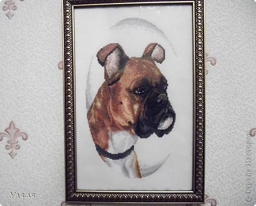 """у меня была собака"" фото 1"