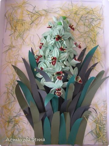 На день рождения мне подарили цветок зеленой орхидеи в коробочке. Простояла она недолго, поэтому решила продлить удовольствие, сделав его из бумаги. Вот что получилось. фото 1