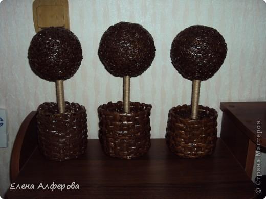 Мои кофейные деревья!!!