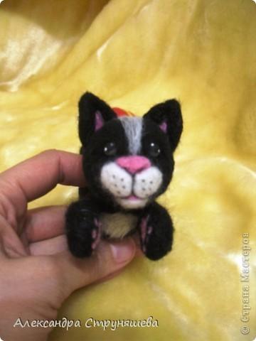 Кот- циркач! фото 1