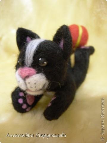 Кот- циркач! фото 3