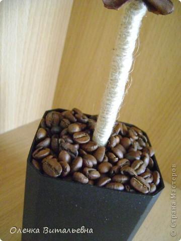 Пополнение моей кофейной плантации. фото 3