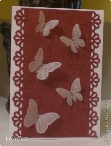 Бабочки с калька фото 1