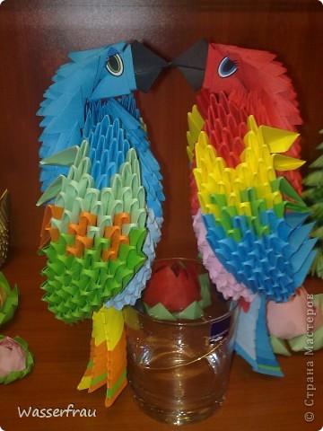Мои попугайчики фото 2