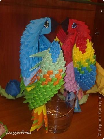 Мои попугайчики фото 3