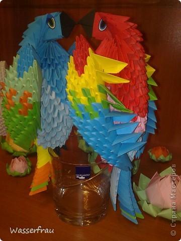 Мои попугайчики фото 4