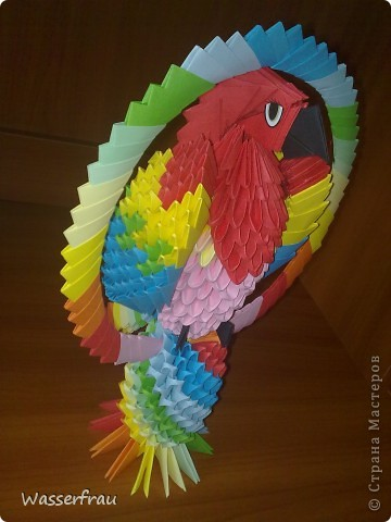 Мои попугайчики фото 1