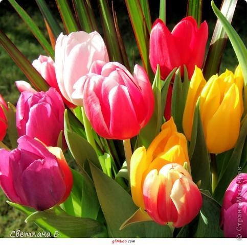 Первые цветы проклюнулись из-под снега и прошлогодней травы. фото 11