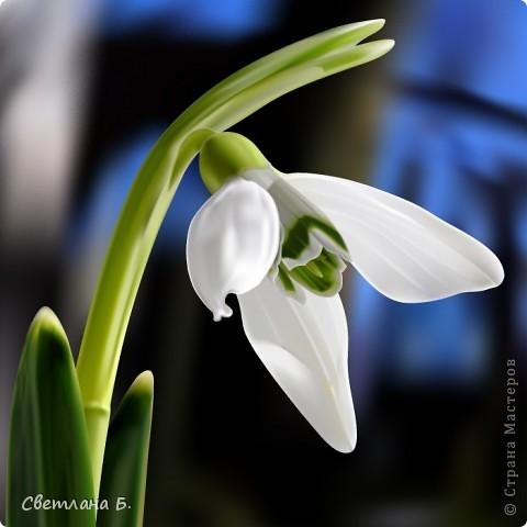 Первые цветы проклюнулись из-под снега и прошлогодней травы. фото 6