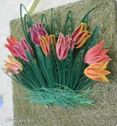 Первые цветы проклюнулись из-под снега и прошлогодней травы. фото 10