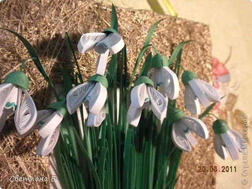 Первые цветы проклюнулись из-под снега и прошлогодней травы. фото 3