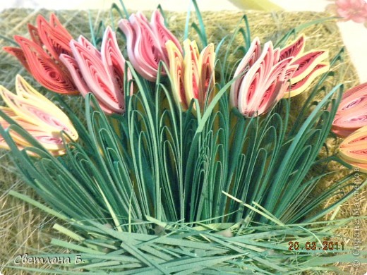 Первые цветы проклюнулись из-под снега и прошлогодней травы. фото 9