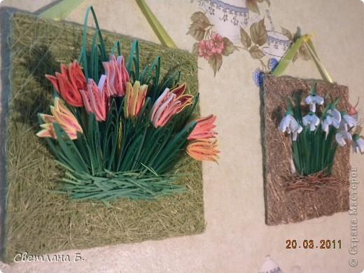Первые цветы проклюнулись из-под снега и прошлогодней травы. фото 12