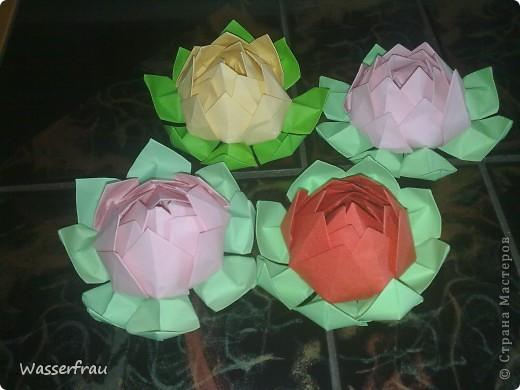 Цветы лотоса фото 1