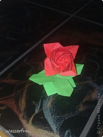 Цветы лотоса фото 2