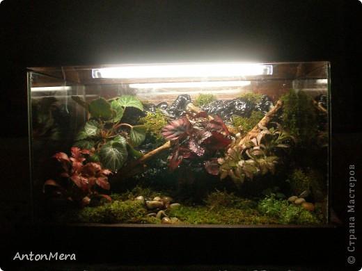 Флорариум или как модернизировать старый аквариум фото 1