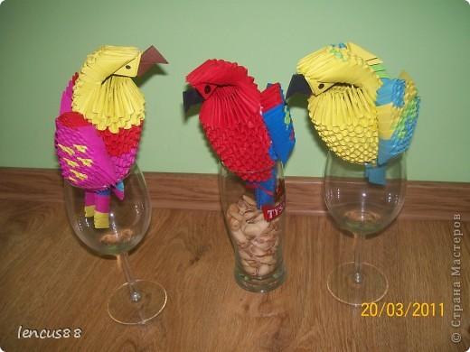 3 Papużki :) jak się podobają ??  фото 1