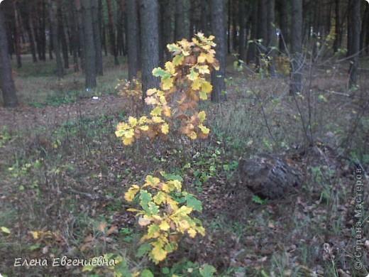В осеннем лесу фото 3