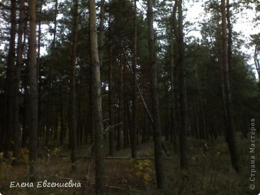 В осеннем лесу фото 2