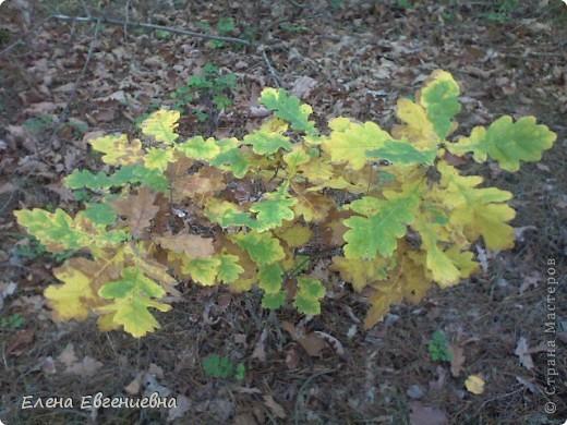 В осеннем лесу фото 1