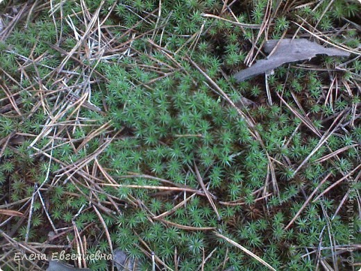 В осеннем лесу фото 4